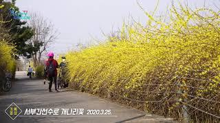 서부간선수로 개나리꽃 [기록영상]썸네일