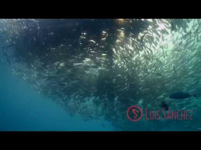Cabo Pulmo, underwater planet series HD.