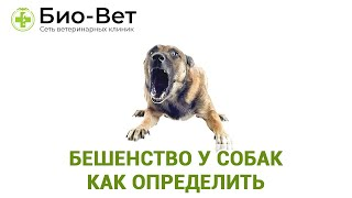 Бешенство У Собак  Как Определить &  Прививки От Бешенства. Ветклиника Био Вет