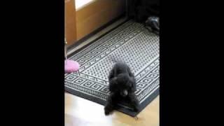 Poodle Clean Feet
