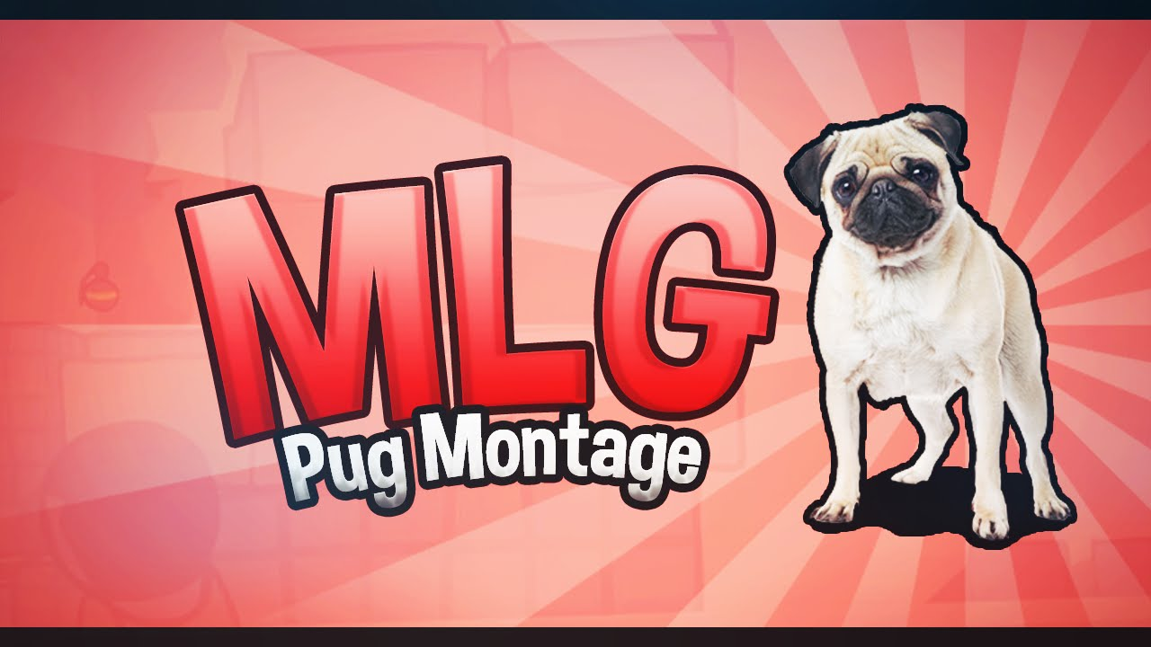 Cute Sleeping Mlg Pug Must Watch Youtube