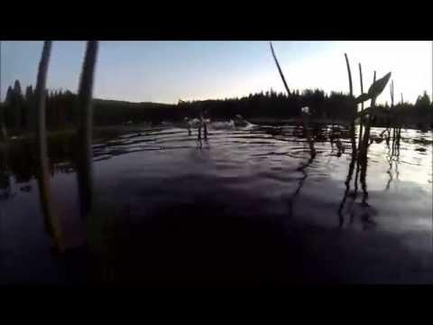 More Bass Fishin in Lassen County