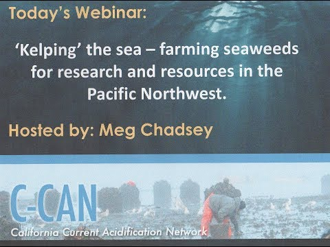2018 05 16 13 03 Kelping the Sea   farming seaweeds for research and resources in the Pacific Northw