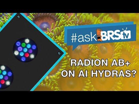 Can you create Radion's AB+ spectrum on AI Hydras? | #AskBRStv