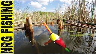Ловля КРУПНОГО КАРАСЯ на диком заброшенном водоёме | Рыбалка на карася