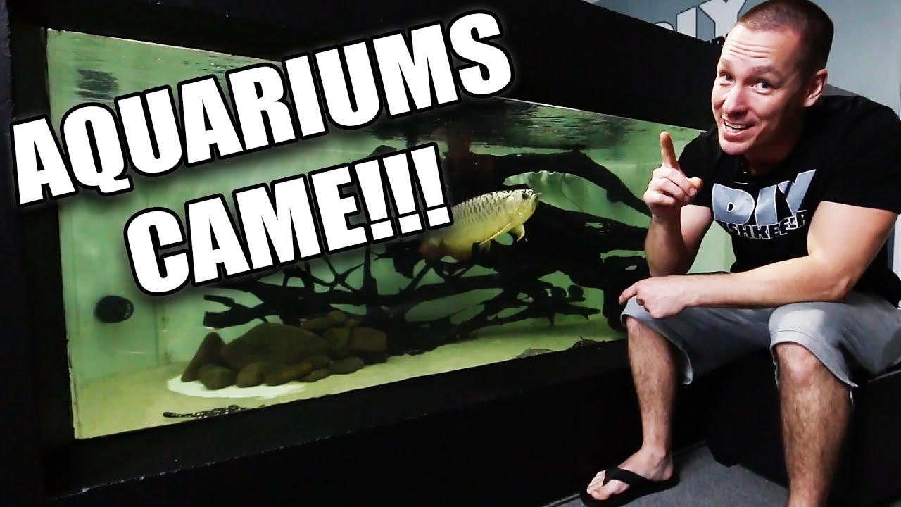the-aquariums-are-here