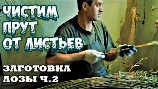 Заготовка лозы ч.2 братья Коваленко