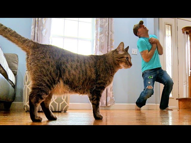 Faking My Death In Front of My Cat – Mean Kitty Reacts