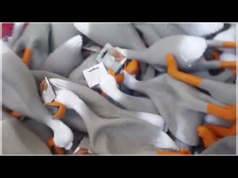 BEST DUCK ARMY COMPILATION