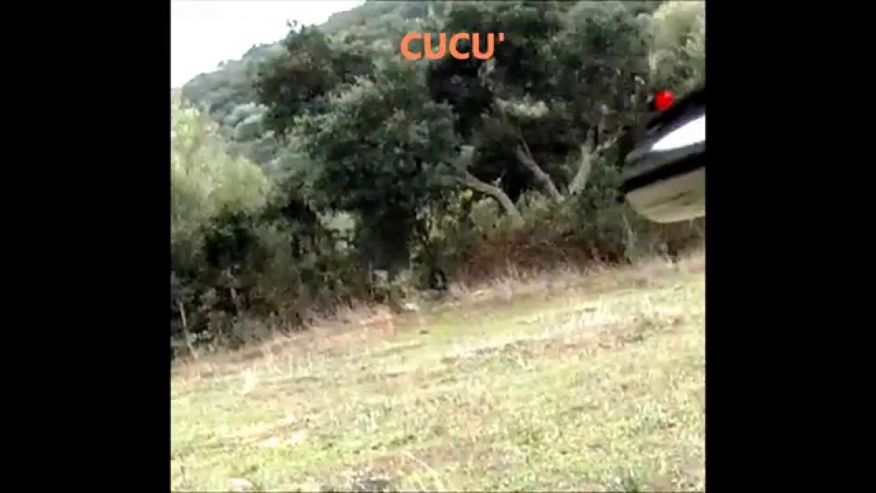 Sardegna Caccia al Cinghiale Berchidda XTC350 (Cucù) - YouTube