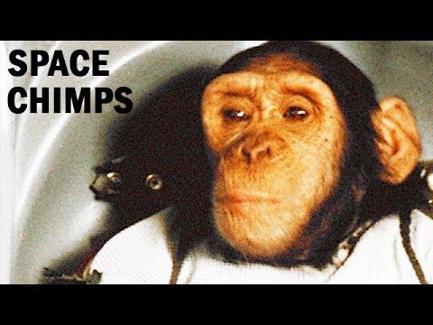 Chimp Test Pilots | Aeromedical & Bioastronautics Research | USAF Documentary | 1967