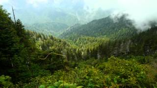 Sacred Mountain Of The Smokies -  Introduction To Mt Le Conte