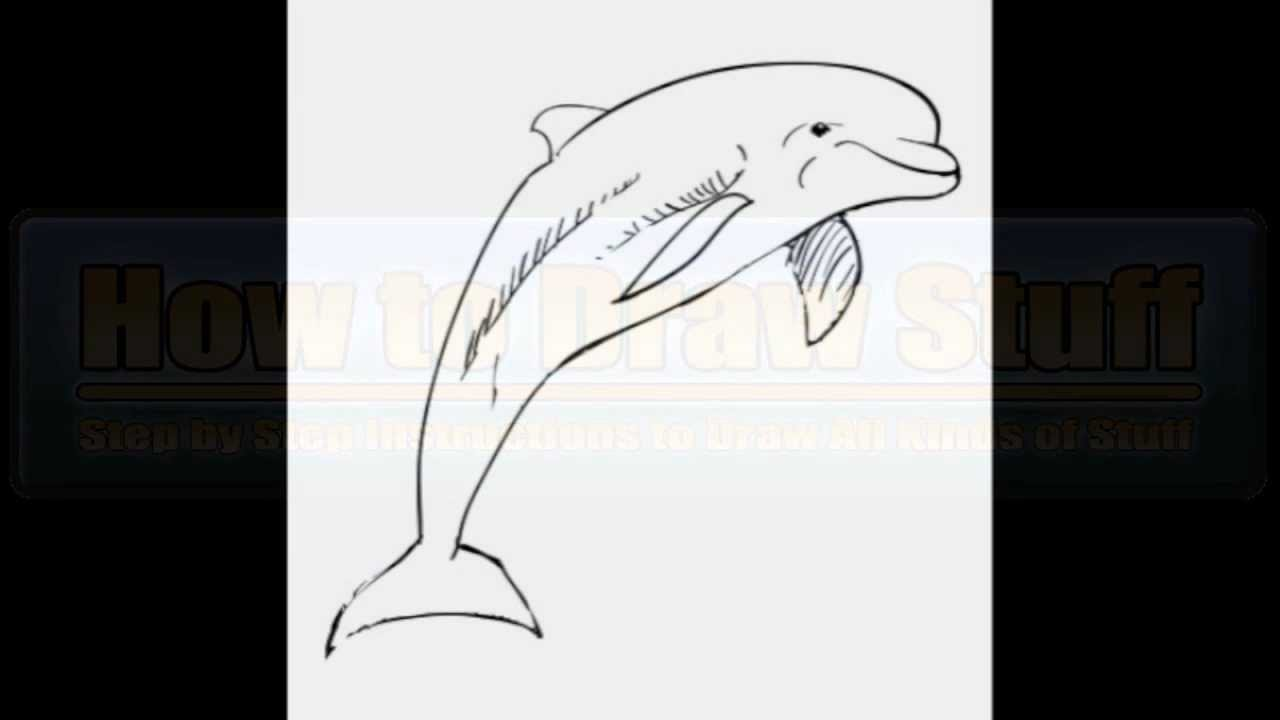 how to draw a dolphin step by step youtube