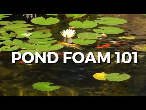 Pond Foam | All You Need To Know About