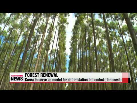 Korea teams up with Indonesia to tackle deforestation   불모지를 울창한 숲으로...한국 노하우 전수
