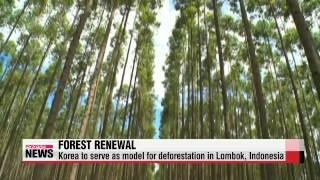 Korea teams up with Indonesia to tackle deforestation   불모지를 울창한 숲으로...한국 노하우 전수