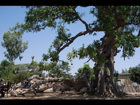 SENEGAL 4/4 Sud de Dakar Mar Lodj Siné Saloum Joal Fadiouth
