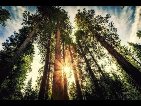 Introducing Yosemite, Sequoia & Kings Canyon National Parks
