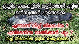 #Gift #thilapia #breeding #malayalam/thilapia #farming tips #mst,#nailotica