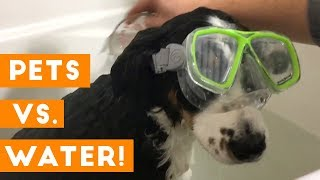 Funniest Pets Hate Water Compilation of 2018 | Funny Pet Videos