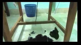 Смотреть приколы 2015 ★★★ Приколы с кошками   Funny Cats Видео 5