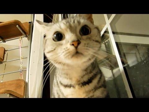 ��ゃん��れ����大丈夫! ...確信�ら安心�変�る猫 ~毎週や���る�����風�-Cat Hate Typhoon