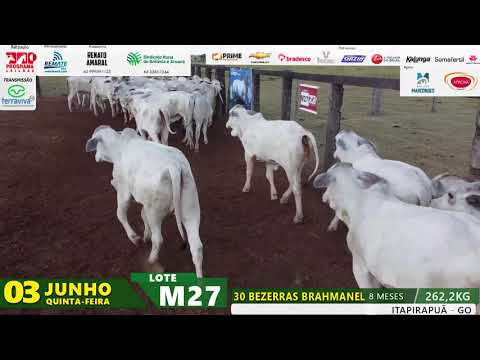 LOTE M27