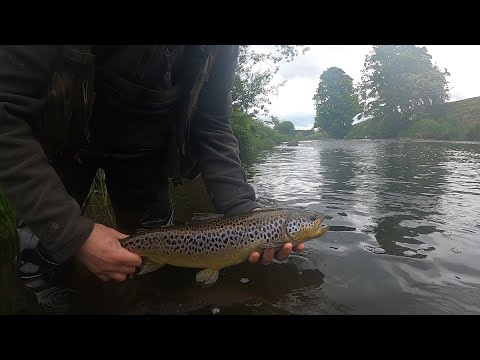 Euro Nymphing - BIG Trout from YouTube · Duration:  3 minutes 59 seconds