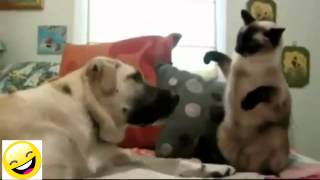 Động vật vui nhộn - ko cười chết liền =))