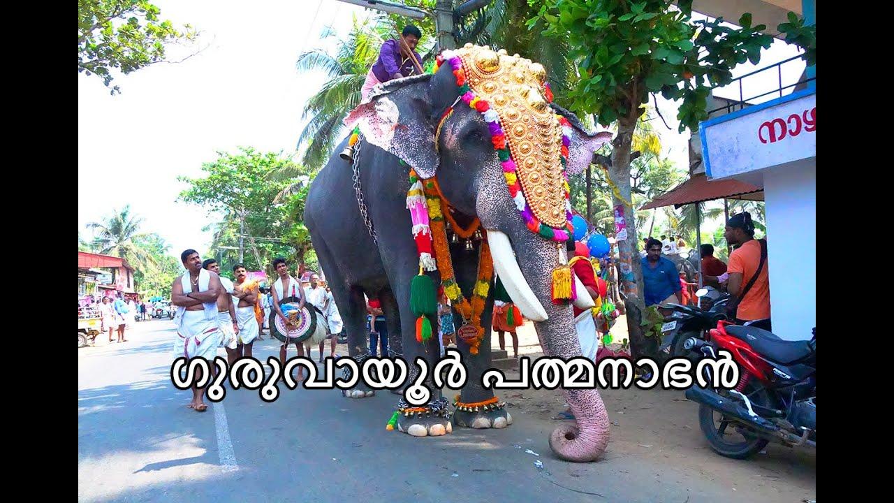 Image result for guruvayoor padmanabhan