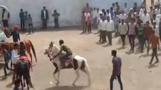 vuclip Best Kathiyawadi Horse Dance