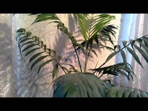 Декоративно лиственные комнатные растения каталог с фото