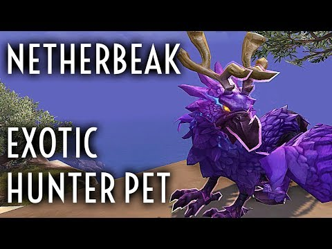 WoW Guide - Netherbeak - Exotic Feathermane Hunter Pet