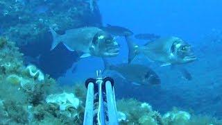 Pesca submarina. Empezamos mal pero acabamos bien