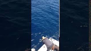 2020 Bisbee's East Cape Offshore | Reel Gold | Striped Marlin