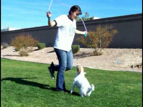 Just Jesse's Amazing Dog Tricks
