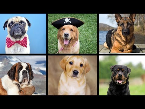 How to choose a puppy in hindi | How to choose dog | How to choose puppy