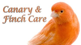 Canary and Finch Care - Requested