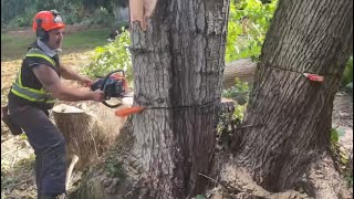 Felling Rotten tree mess, not what we expected