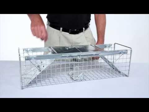 How to Set: Havahart® Medium 2-Door Trap Model #1030 for Mink, Large Squirrels & Rabbits