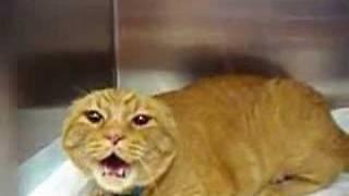 бешеный кот