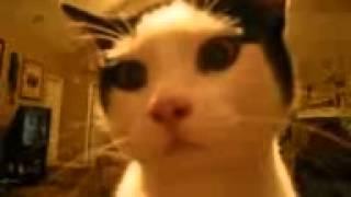 Про кошек3(, 2015-04-21T11:58:09.000Z)