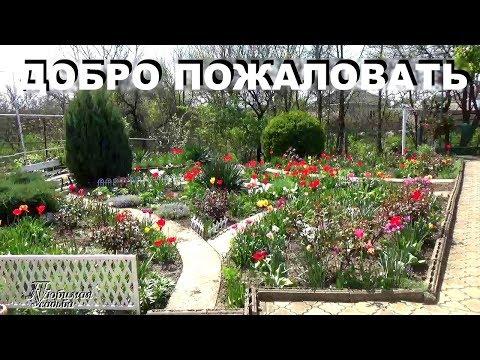 Дизайн участка нашего подворья  во время  буйного весеннего цветения