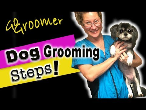 Dog Grooming Steps-How to Groom a Dog from Start to Finish (give your dog a haircut)