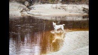 Ямальские ветеринары рассказали, как часто нужно мыть собаку, и какие прививки ставить «найденышам»