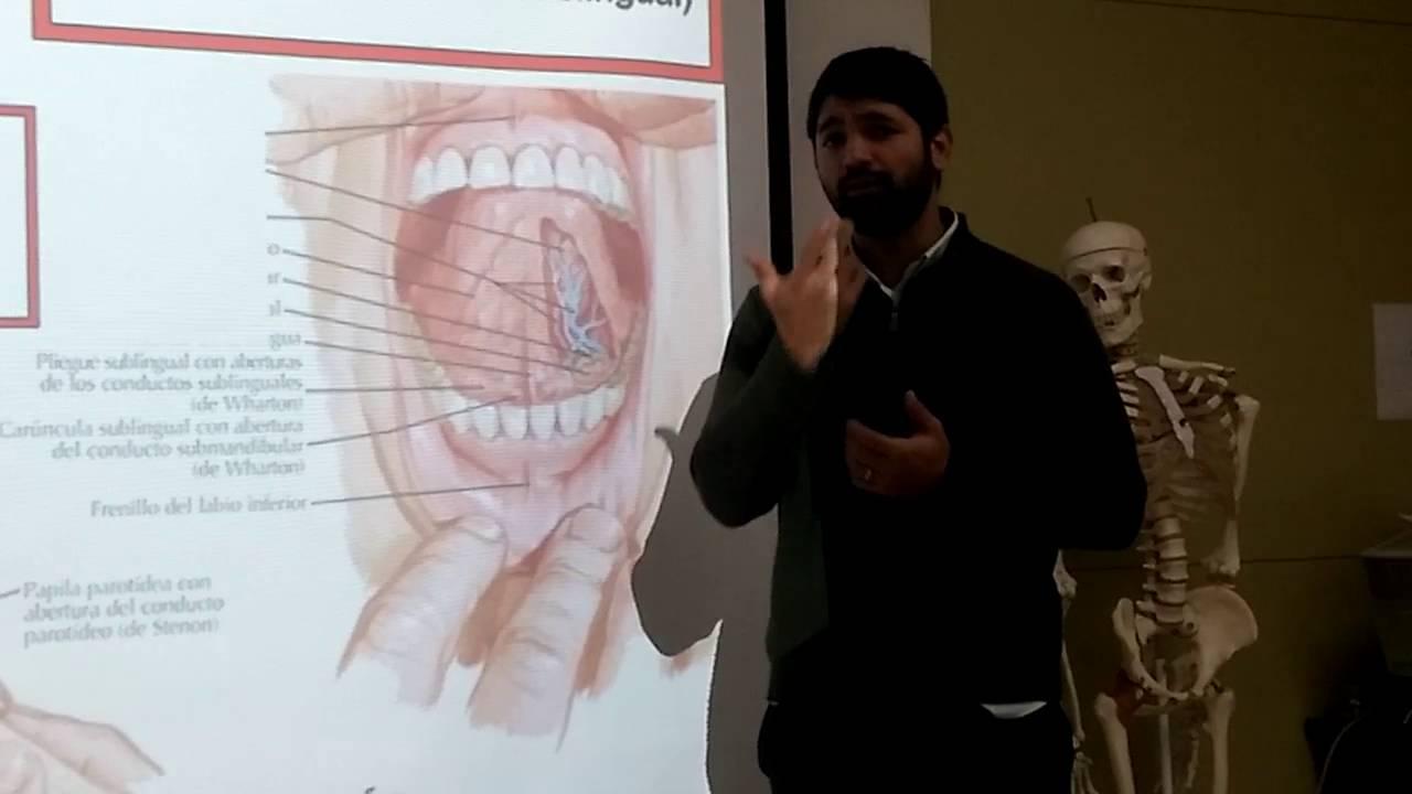 Anatomía general - Sistema digestivo: cavidad oral, dientes y lengua ...