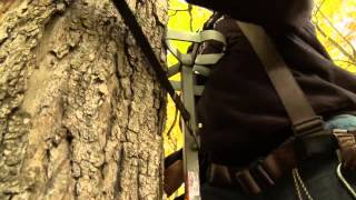 Climbing Twisted Trees - Chad Ritter - Mossy Oak