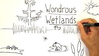 Wondrous Wetlands | Whiteboard