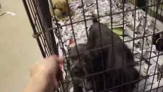 Beagle/terrier Mix Puppies 5/30/14