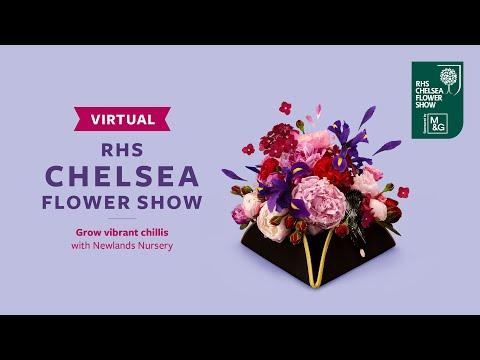 Grow vibrant chillis with Newlands Nursery | Virtual Chelsea Flower Show